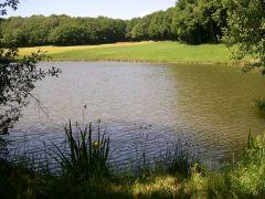 Etang de pêche privé : pêche garantie