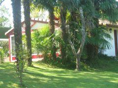 maison entourée de palmier