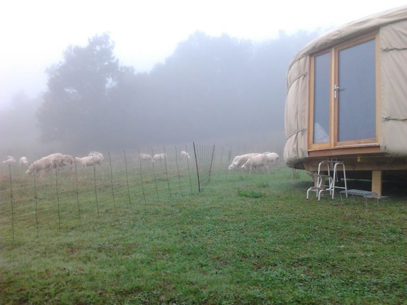 tranquille ce matin brumeux...