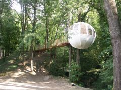 la bulle sur la branche