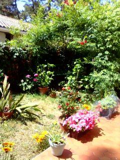 detail jardin