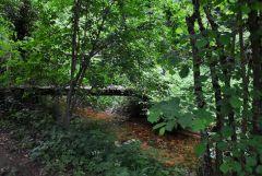 La Muzette: ruisseau sur la propriété