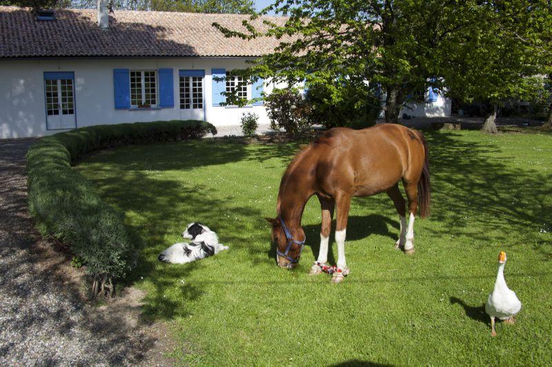 La maison blanche et ses animaux