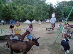 les chèvres s'invitent sur le camping