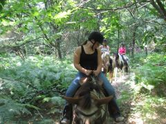 Randonnée équestre dans les bois de Missandre