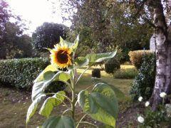 Un souffle de douceur partout dans le jardin