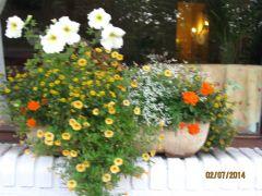Jardiniére devant l'Hôtel