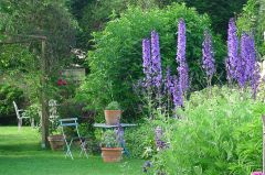 Les delphiniums colorent le jardin au printemps.