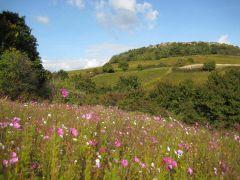 Nos collines préservées - sites Natura 2000