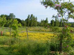 prairies sur le site
