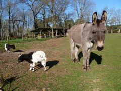 Pupana et les chèvres
