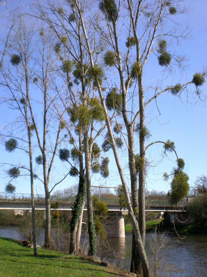 le Pont de La Creuse