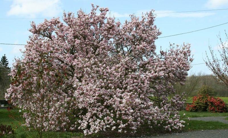 The magnolias b b normandy chambre d 39 h tes - Normandie chambre d hote ...