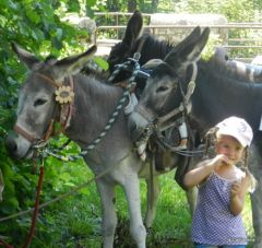 Balade avec nos ânes