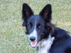 Maya notre chienne
