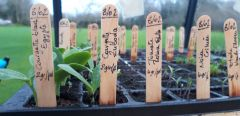 Semis de légumes bio dans la serre du 46