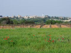 Village d'Entre vigne