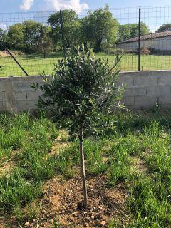 Notre premier arbre
