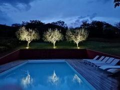les oliviers de la piscine éclairés la nuit
